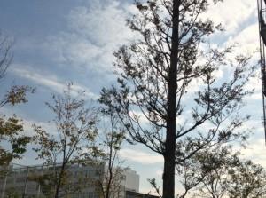 雲と枝がダンスしてる