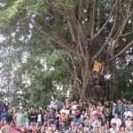 木に登って見物する人も