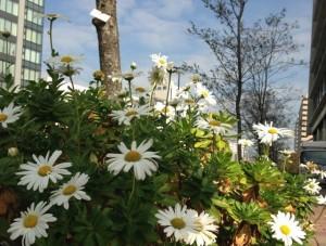 メイちゃんに似た白い花