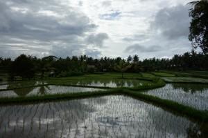 ジャランカジェン北部の田園地帯