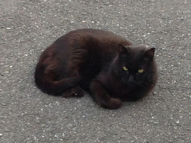 夏目漱石の小説に出てきそうなネコに出会いました