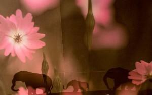 丸山則夫作品展『季節の瞬間3 春』は6月21日(土)まで 11:00〜18:30@Art Space RONDO で開催中