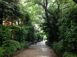 雨降りの朝
