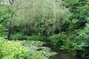 ブログ217_地中美術館_睡蓮の池