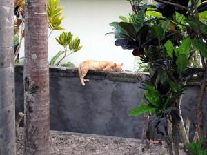 ブログ226_ロカパラヴィラ猫